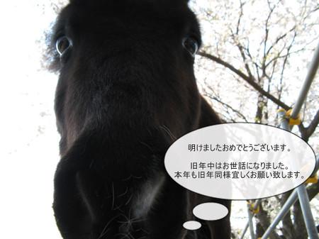 20140101_img_0395